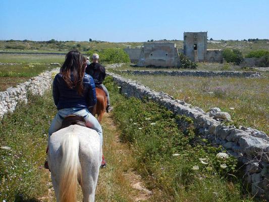 cavallo-5